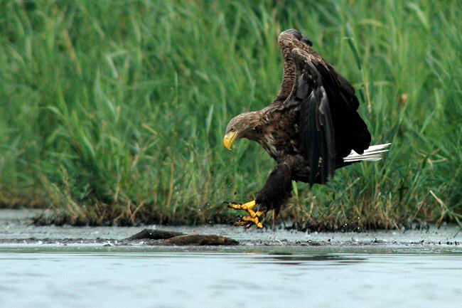 Velká kořist a velké ptáky