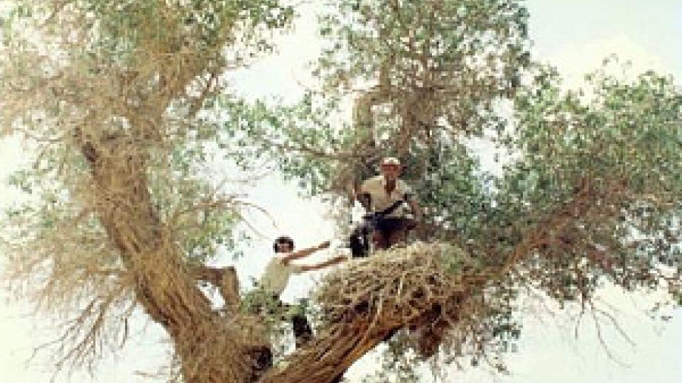 Ma Ming na hnízdě čápa, ti hnízdí v Tarimske pánvi vzácně
