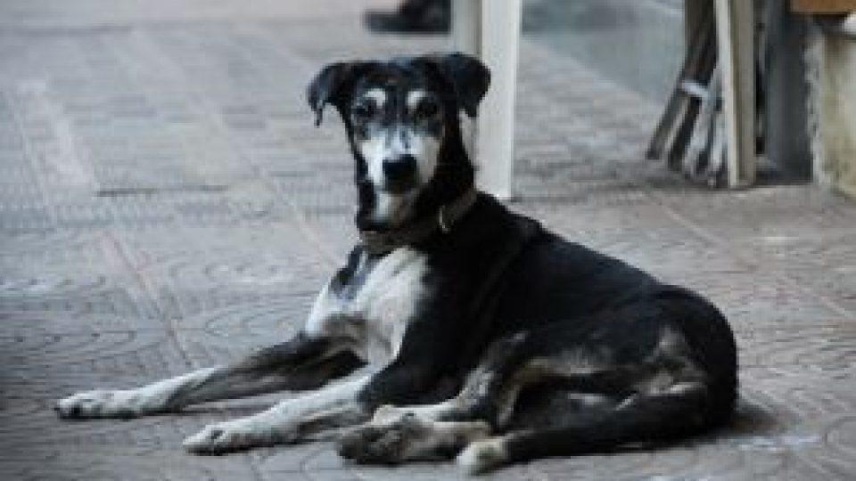 V Bombaji žije i hodně psů