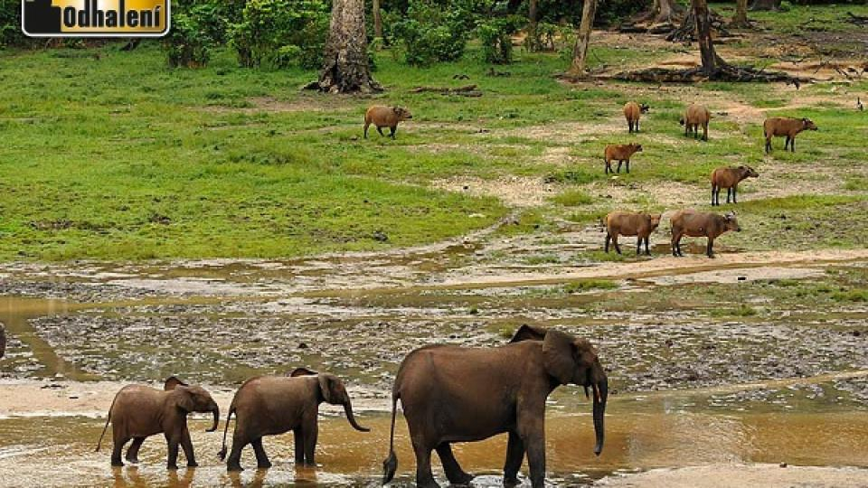 Dzanga Bai, Středoafrická republika