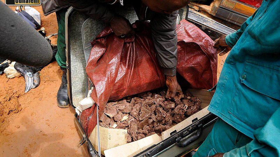 """V kufru byly uvařené kusy masa z antilopy určené zjevně na prodej. Když je ecoguardi začali přendavat do tašky, dítě se rozplakalo. Proč? """"Bereme mu maso,"""" řekl Tomi..."""