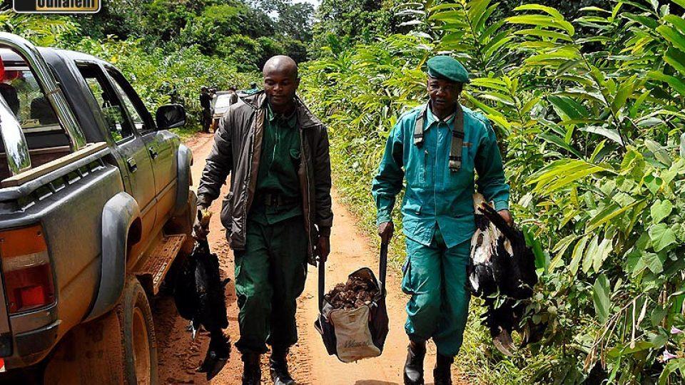 Ecoguardi přenášejí zabavená zvířata a maso na korbu našeho auta. Sice disponují terénním vozem, ale ten je zrovna v Yaoundé; jinak mají jen motocykly. Chybějí  jim také stany, a tak během desetidenních hlídek v lese spí pod igelitovými plachtami.