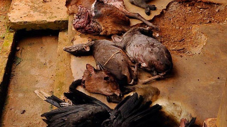 Mrtvoly zvířat zabavené u Djoumu během jednoho dopoledne.