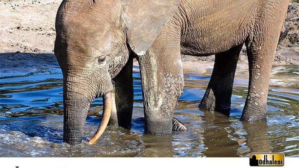 Sloní kalendář - Červenec