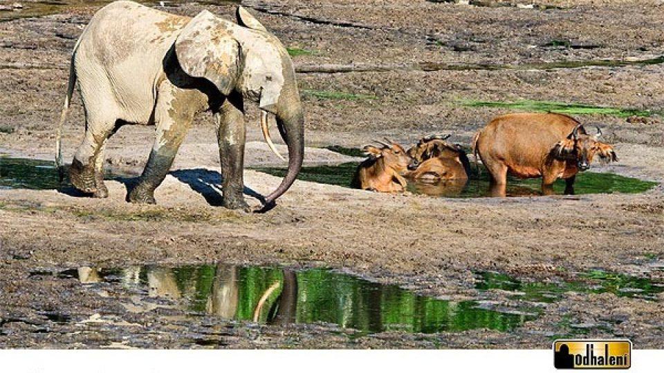 Sloní kalendář - Srpen