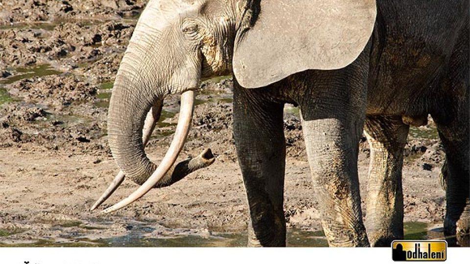 Sloní kalendář - Říjen