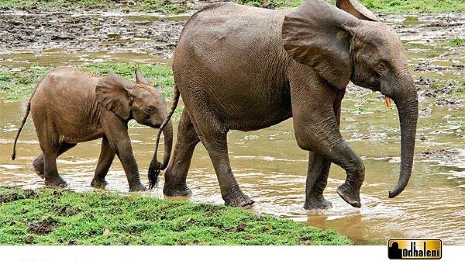 Sloní kalendář - Listopad