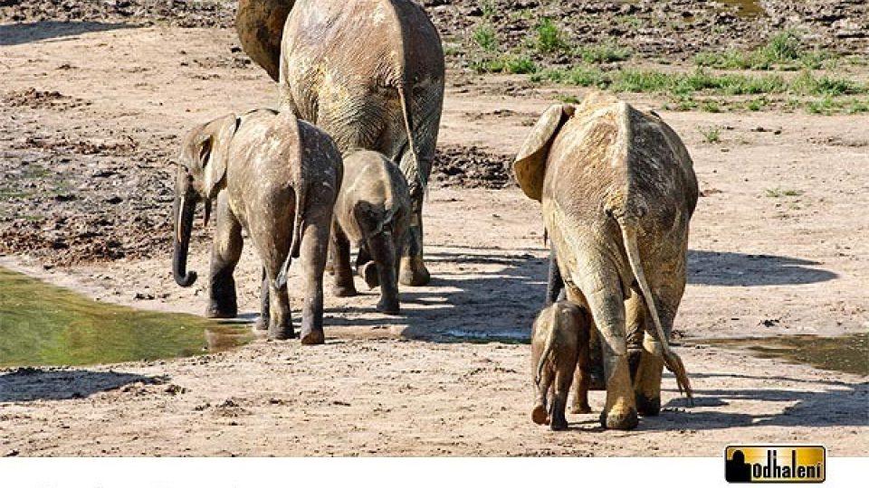 Sloní kalendář - Prosinec