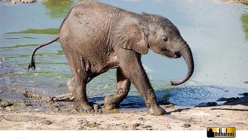Sloní kalendář - Září