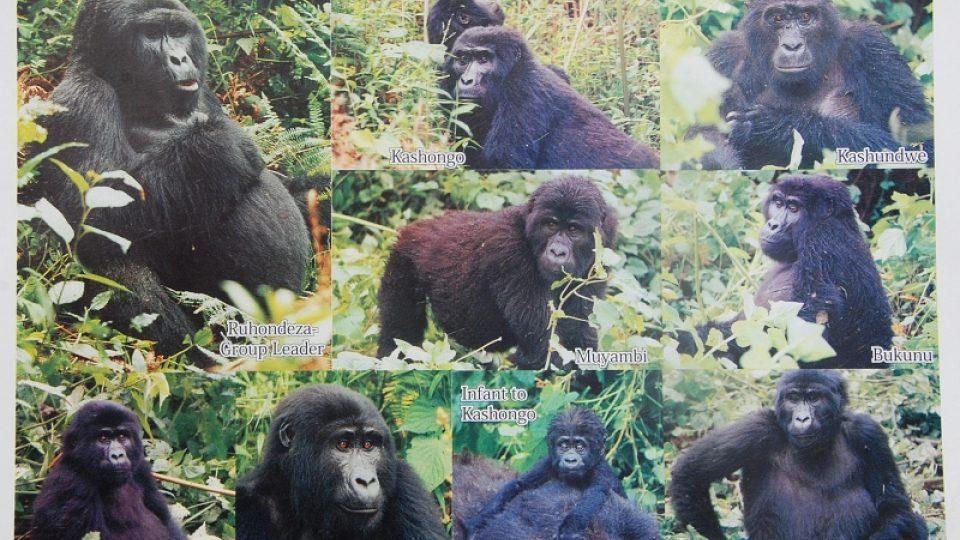 Karta s portréty rodiny Mubare