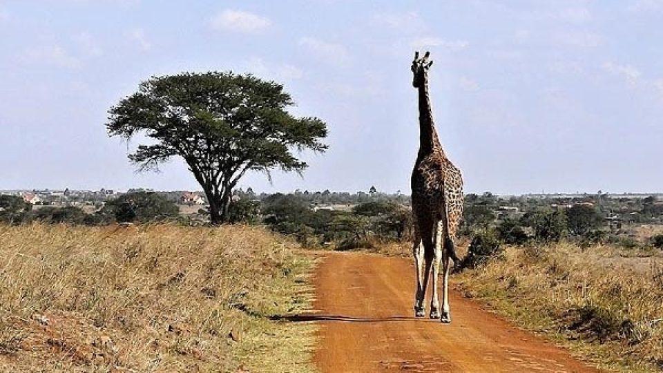 Richard Leakey se snaží i osvětově působit. Pravidelně se účastní nejrůznějších školení, která mají přispět k tomu, aby se do ochrany zvířat zapojilo co nejvíce Afričanů.