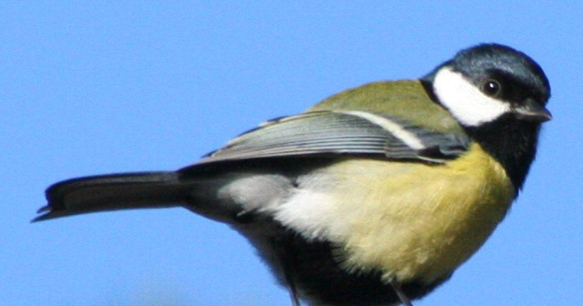 videa zdarma z velkých černých ptáků